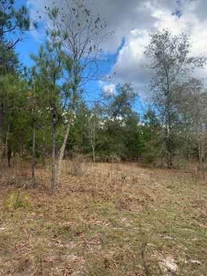 HUNTING/RECREATIONAL TRACT- GAINESVILLE, ALACHUA COUNTY, FL