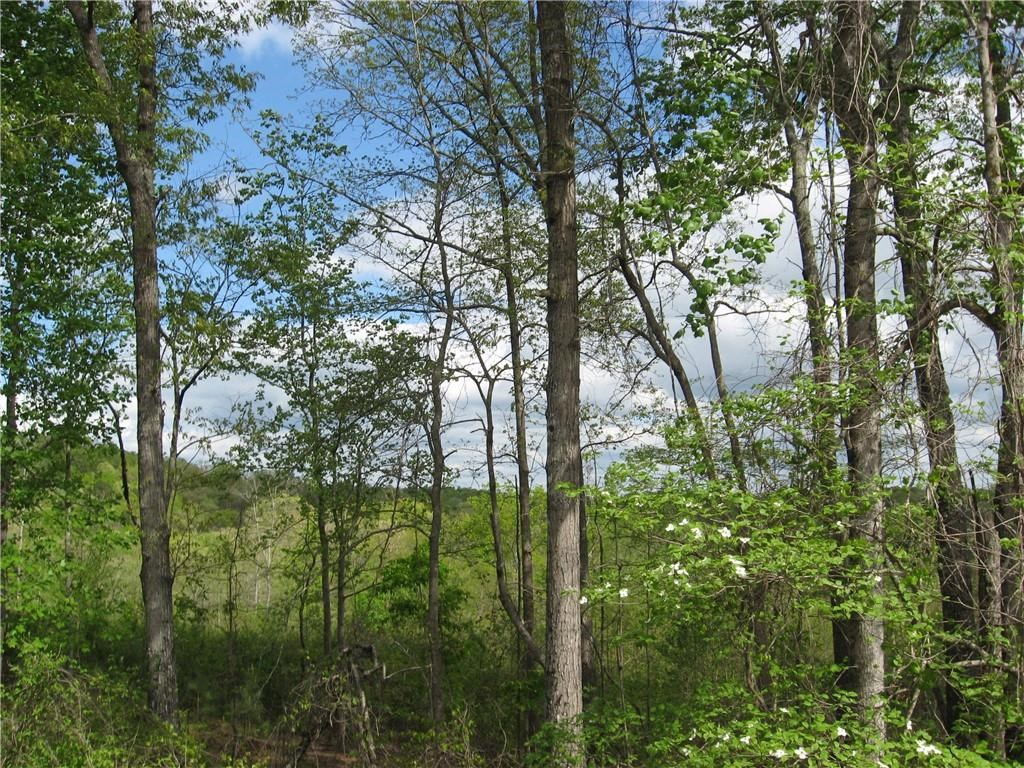 Land for sale, Ball Ground, Cherokee County, Acreage, Wooded