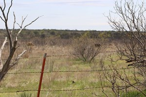 HUNTING RANCH FOR SALE CHILDRESS TEXAS NEAR RED RIVER