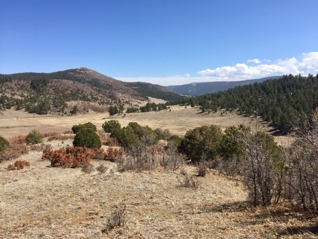 Gorgeous 40 Acre Lot in North Canon City CO