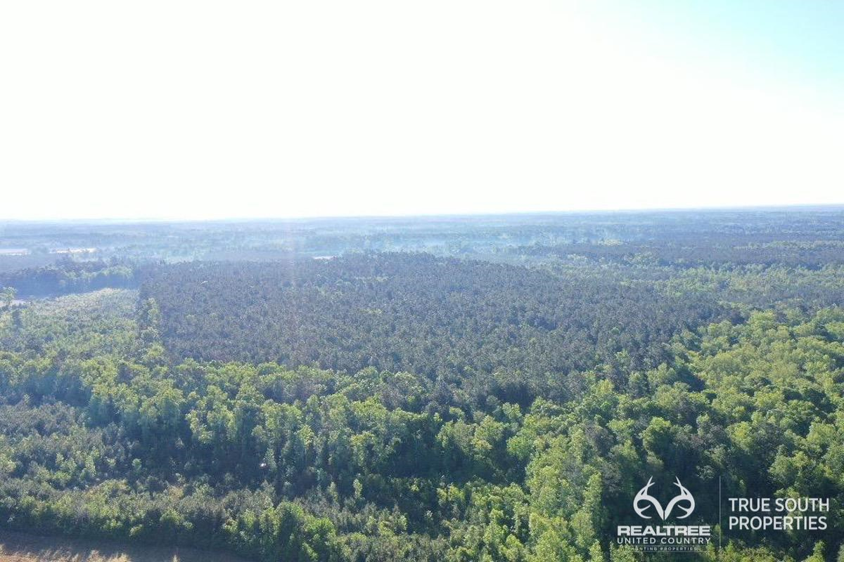 Padgetts Timber & Hunting Land Colleton