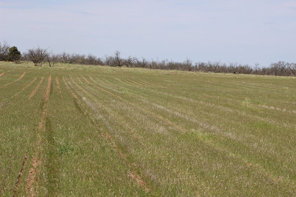 320 Acre Harmon County Oklahoma Farm/Ranch For Sale