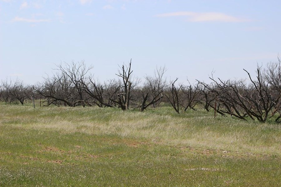 Oklahoma Farm-Ranch For Sale6