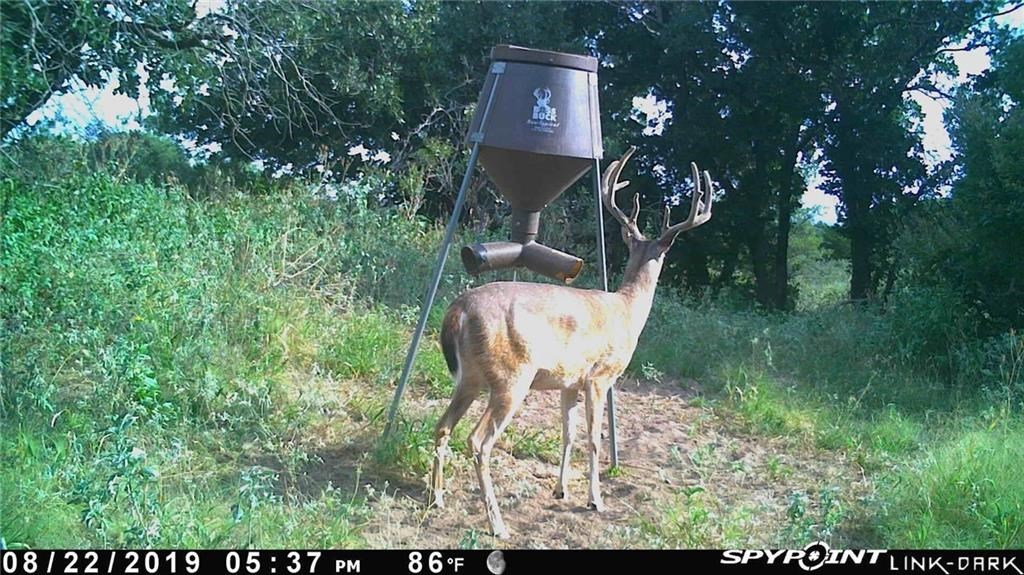 Game camera pictures