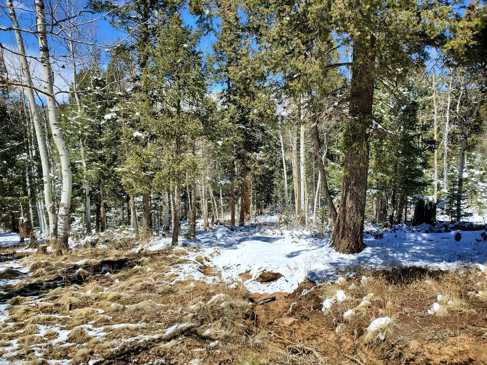 Wooded lot Divide CO National Forest Hunt ATV