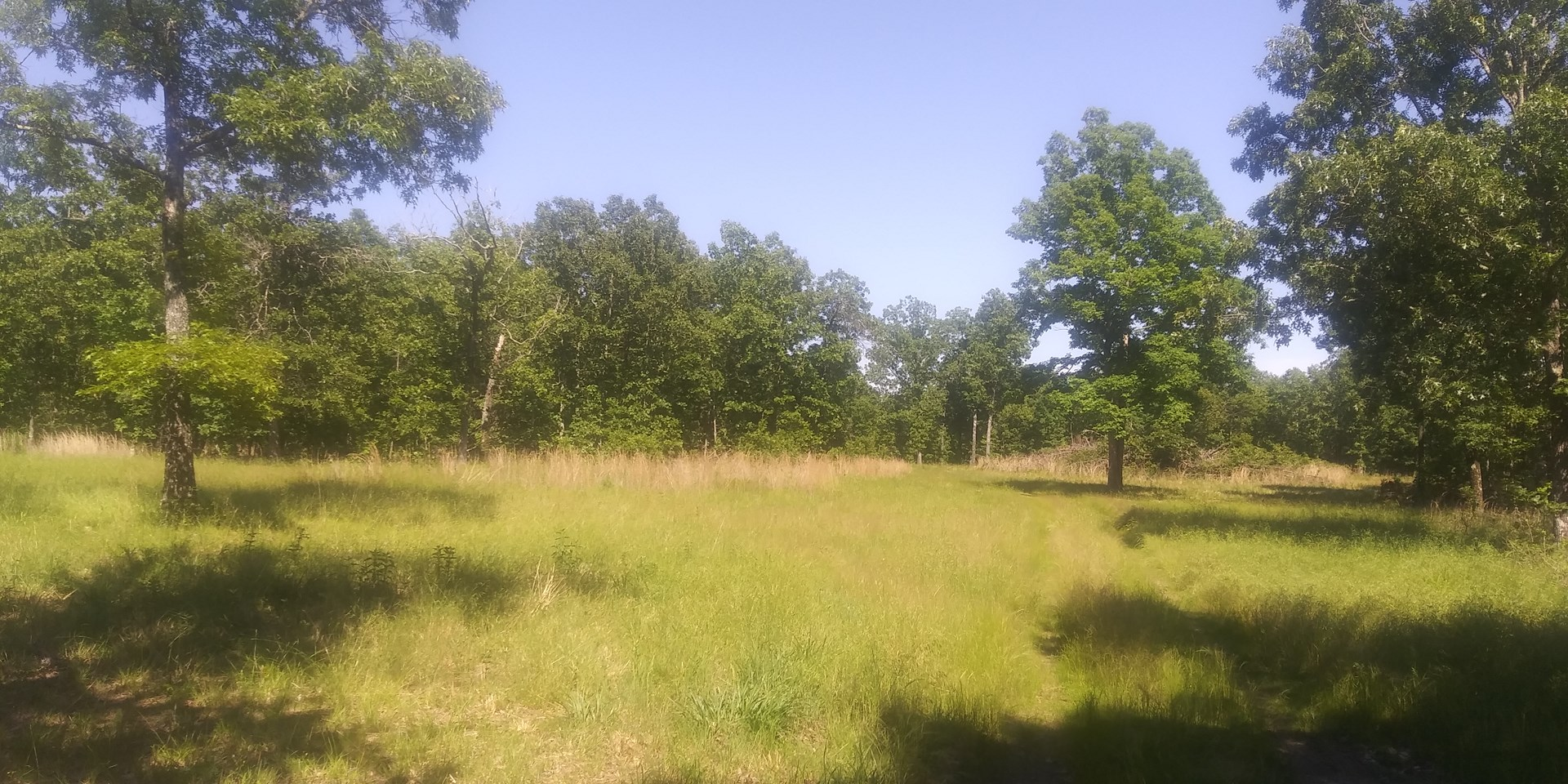 Land for Sale in Southern Missouri!