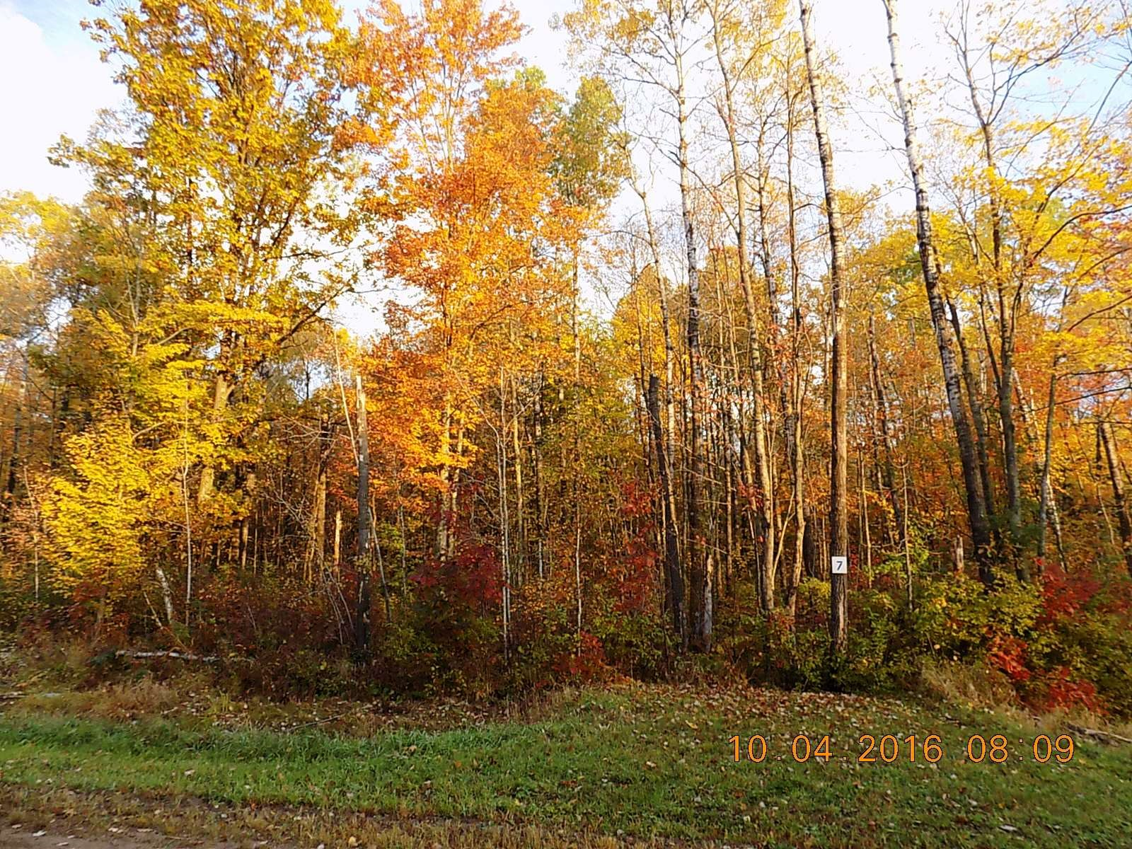 Wooded, Buildable Lot For Sale in Sandstone MN Subdivision