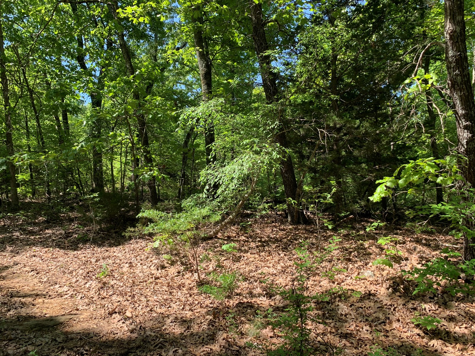 Wooded Acreage—Close to Lake/Town
