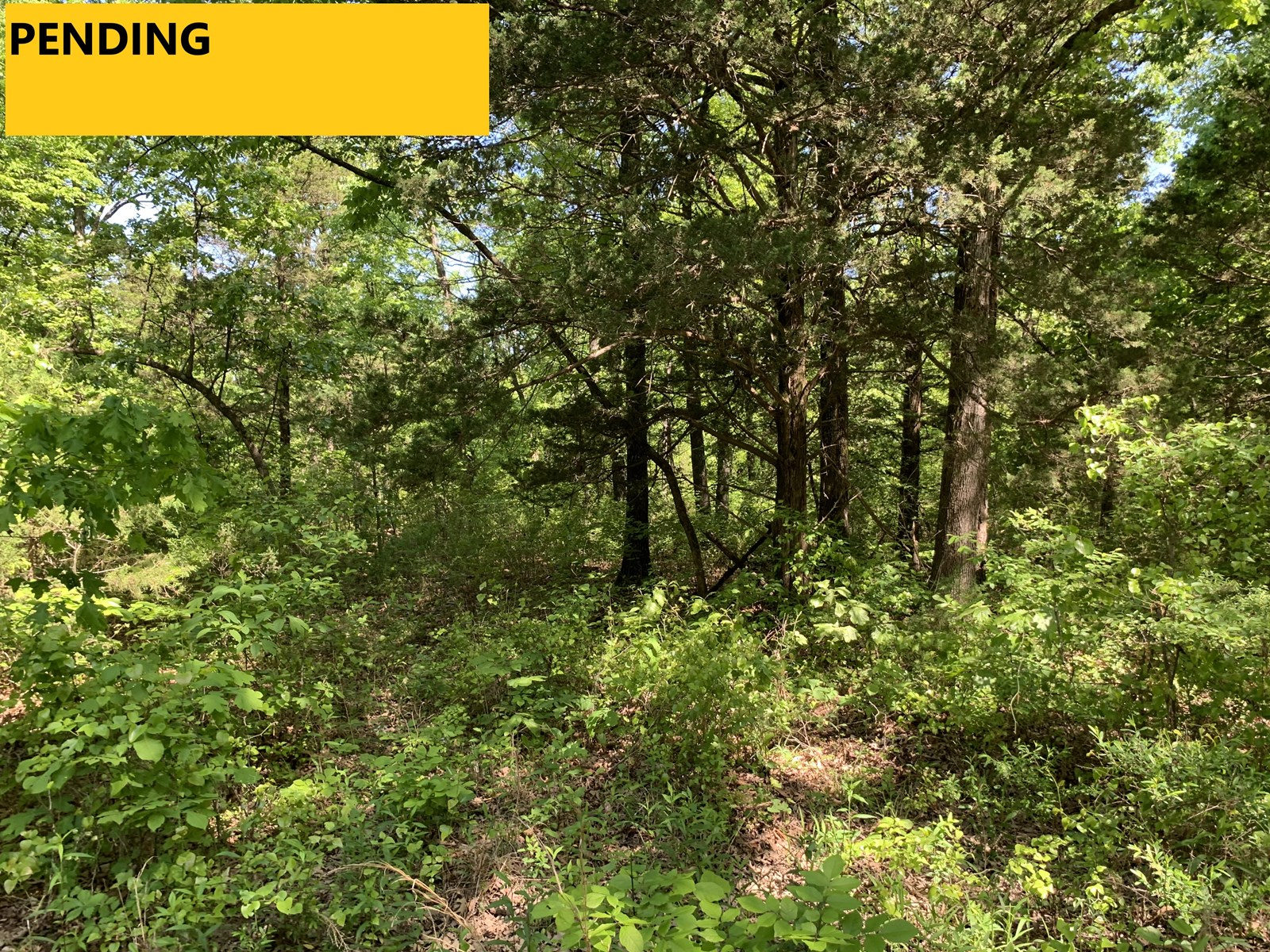 Wooded Acreage—Close to Bull Shoals Lake & Town