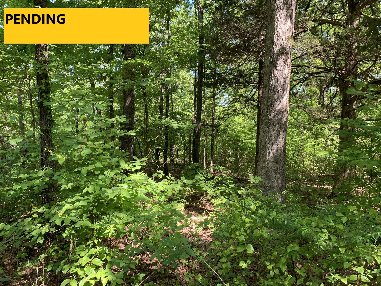 Wooded Acreage—Close to Lake & Town