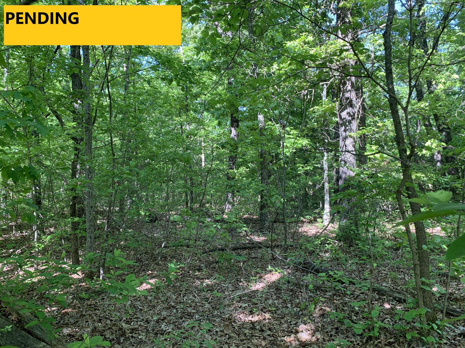 Small Creek-Wooded Acreage—Close to Lake & Neighbor Town