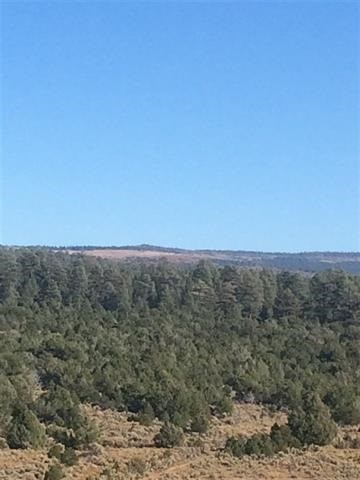 Northern NM Mountain Land for Sale Borders National Forest