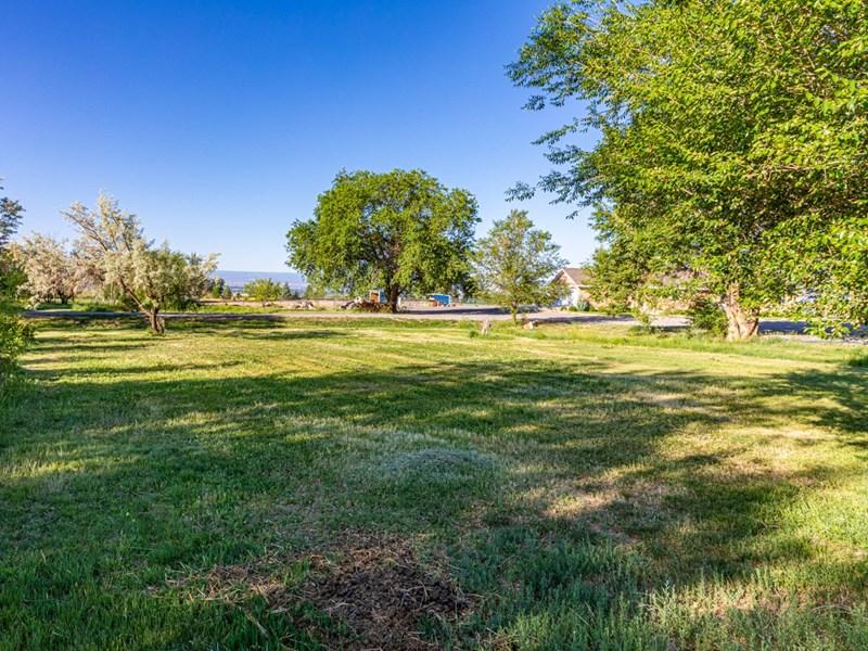 Trees & grassy area