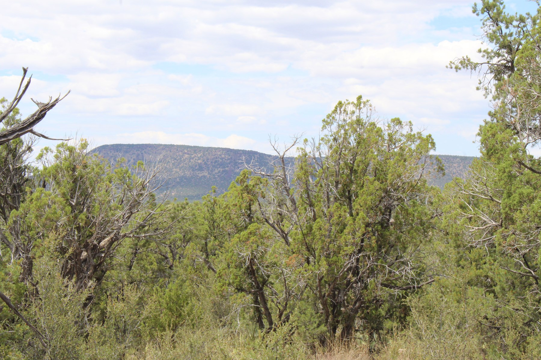 Mountain Acreage for Sale with Views, Owner Financing, AZ