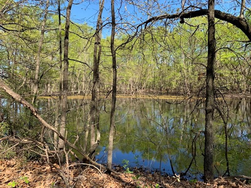 Recreational 80-Acre Tract in Cedar County, MO