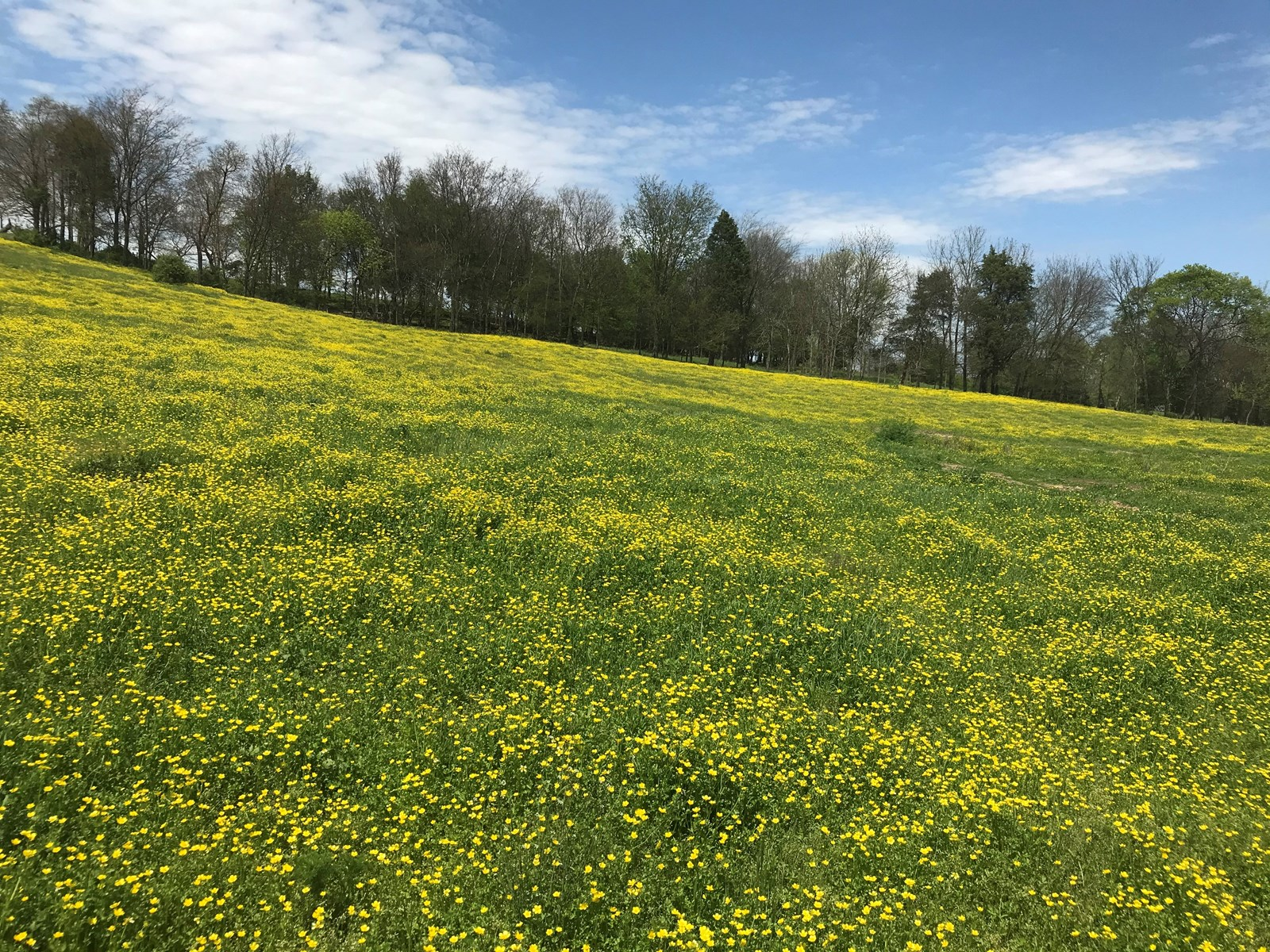 Large 146 Acre Farm for Sale in Barren County, KY
