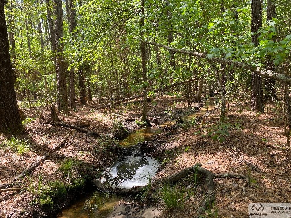 North Hunting / Timber / Recreational Land Orangeburg CO, SC