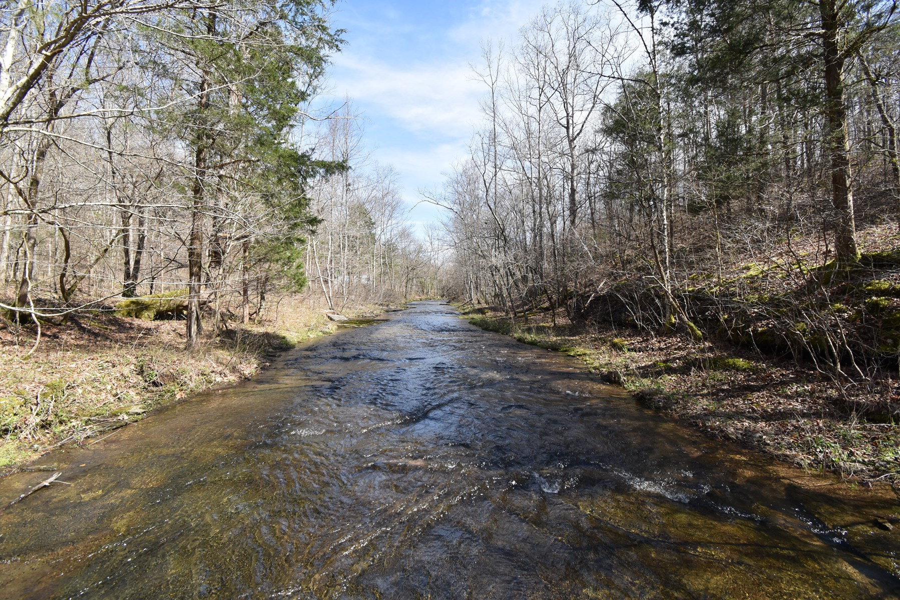 Tennessee Land For Sale! 100.9 Ac Woods, Water, Wildlife