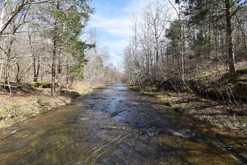 TN Land For Sale with Creek, Springs and Hunting Property