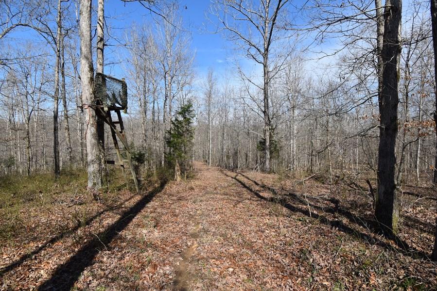 timberland in Tn