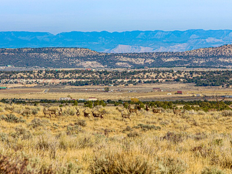 Land For Sale near Grand Junction Colorado