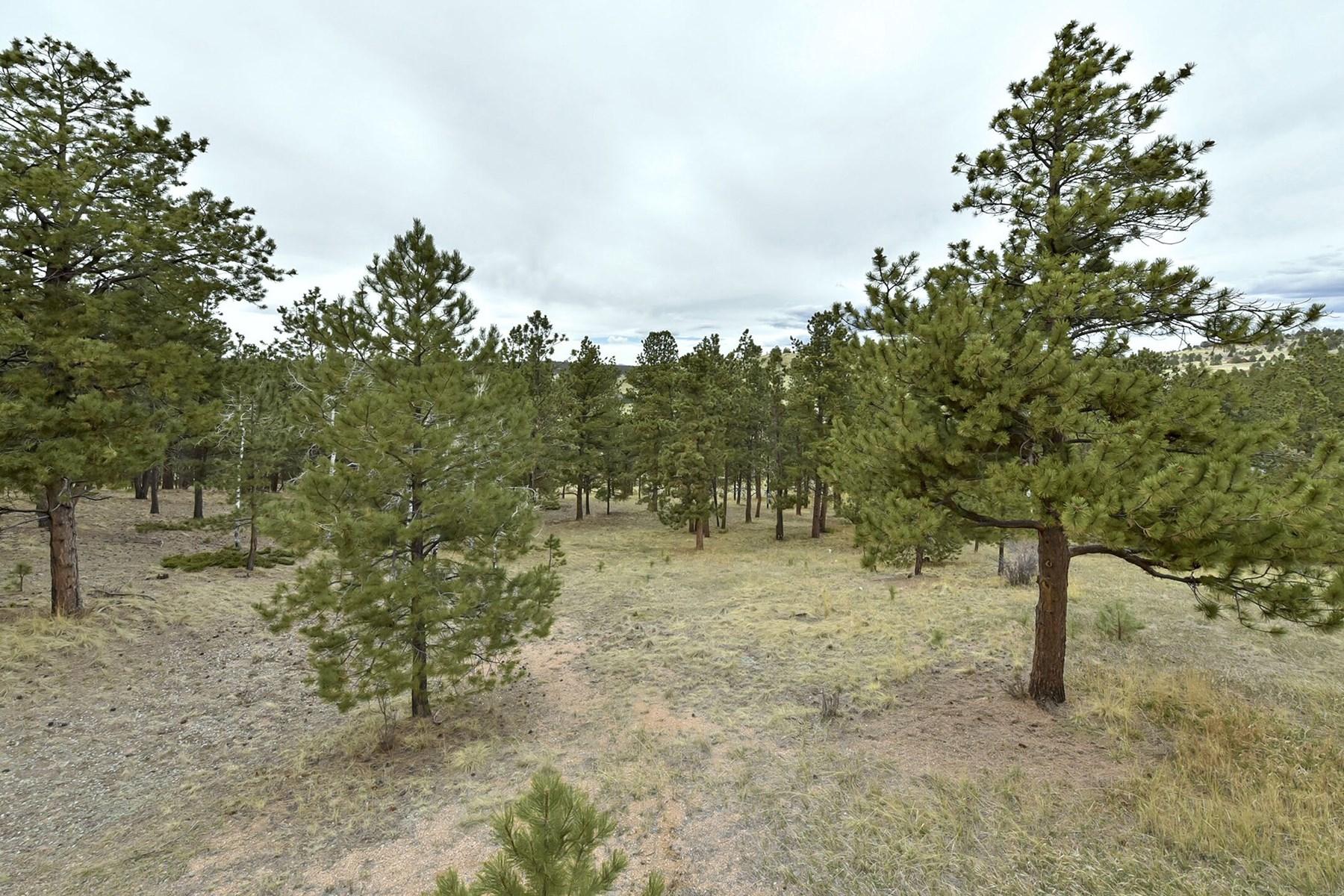 2 acres of treed land
