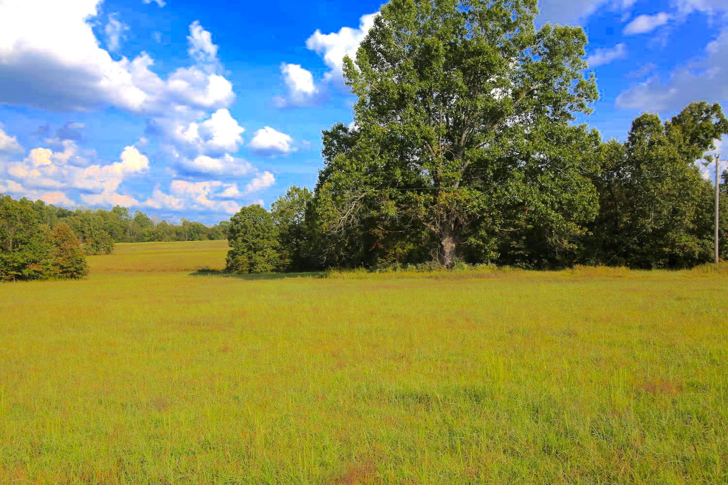 Land for Sale in MO Ozarks