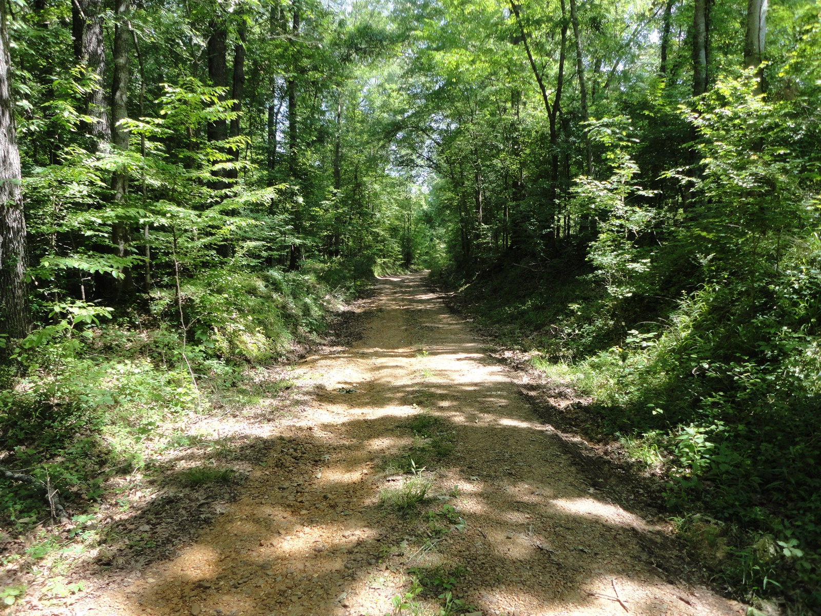 Hunting Land Timber Land Claiborne County Mississippi
