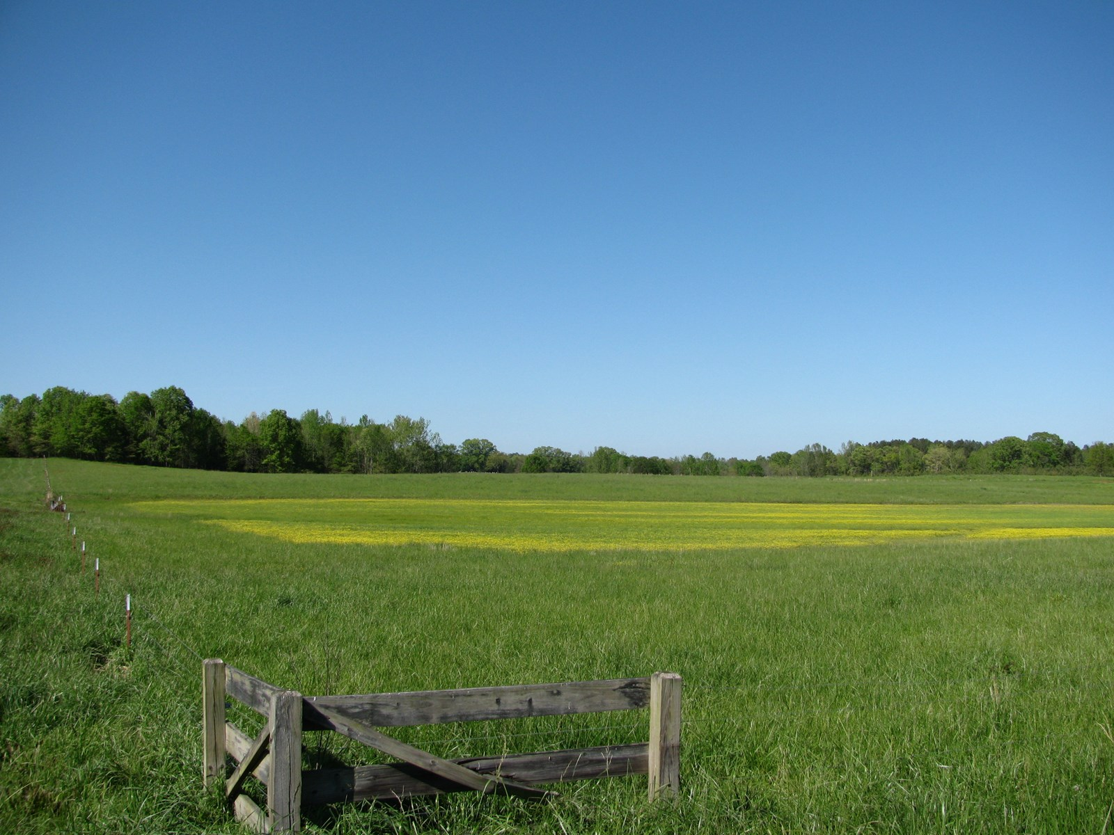 FARM FOR SALE IN TN, CREEK, UNRESTRICTED FENCED PASTURE LAND