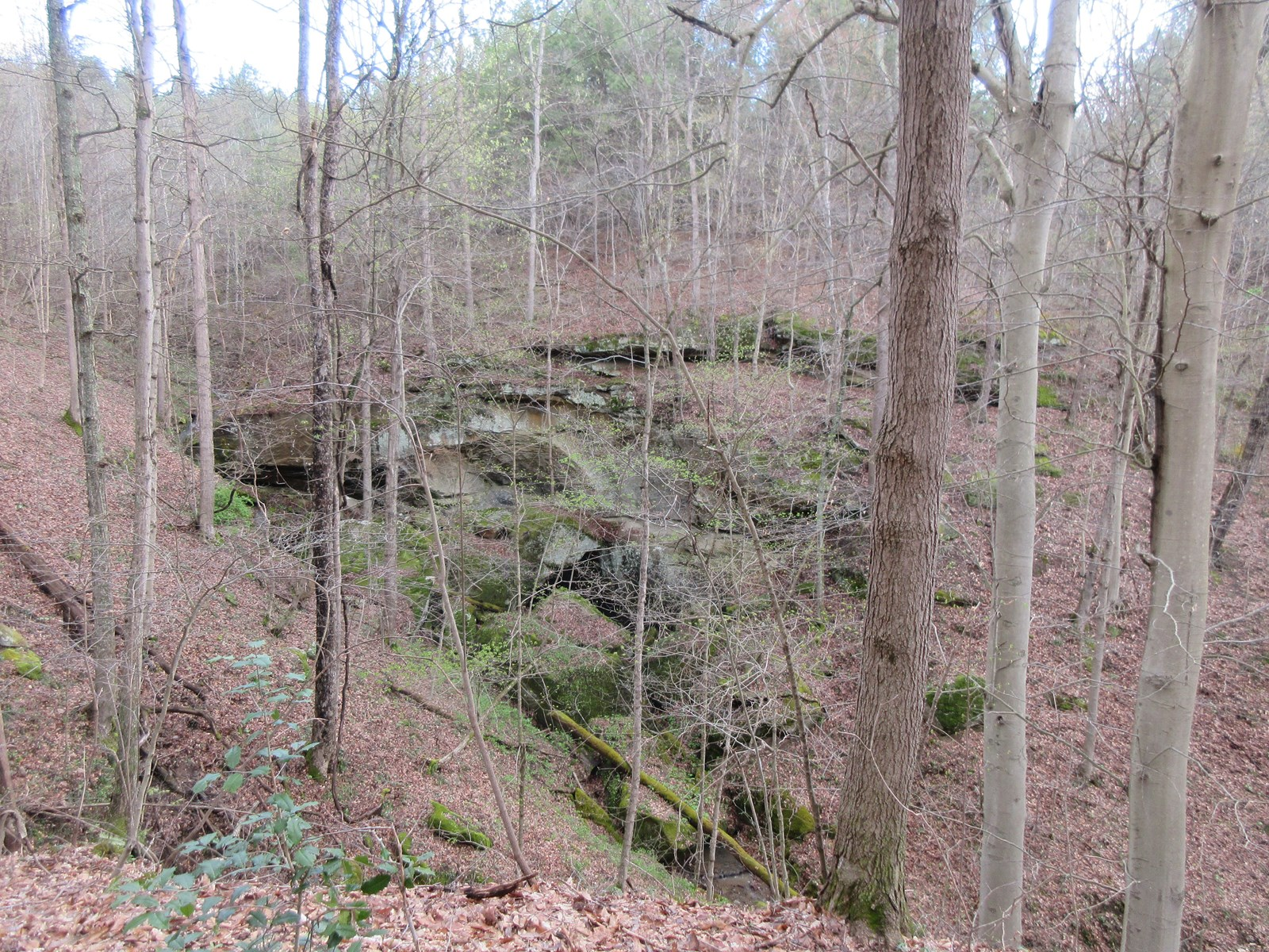Meigs county Hunting Land with Timber Potential