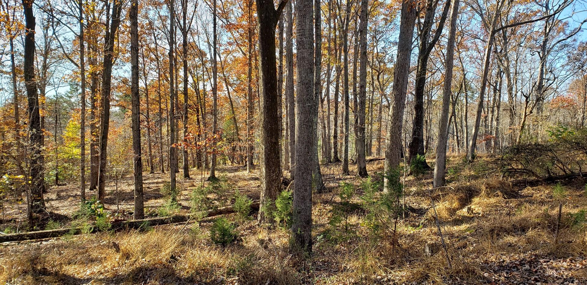 28 Acres in Pittsylvania County, VA