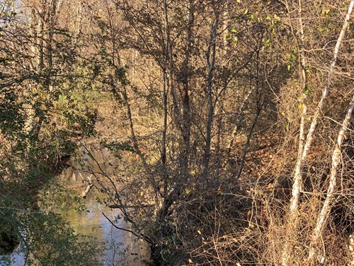 RECREATIONAL LAND FOR SALE IN TENNESSEE WITH CREEK / HUNTING