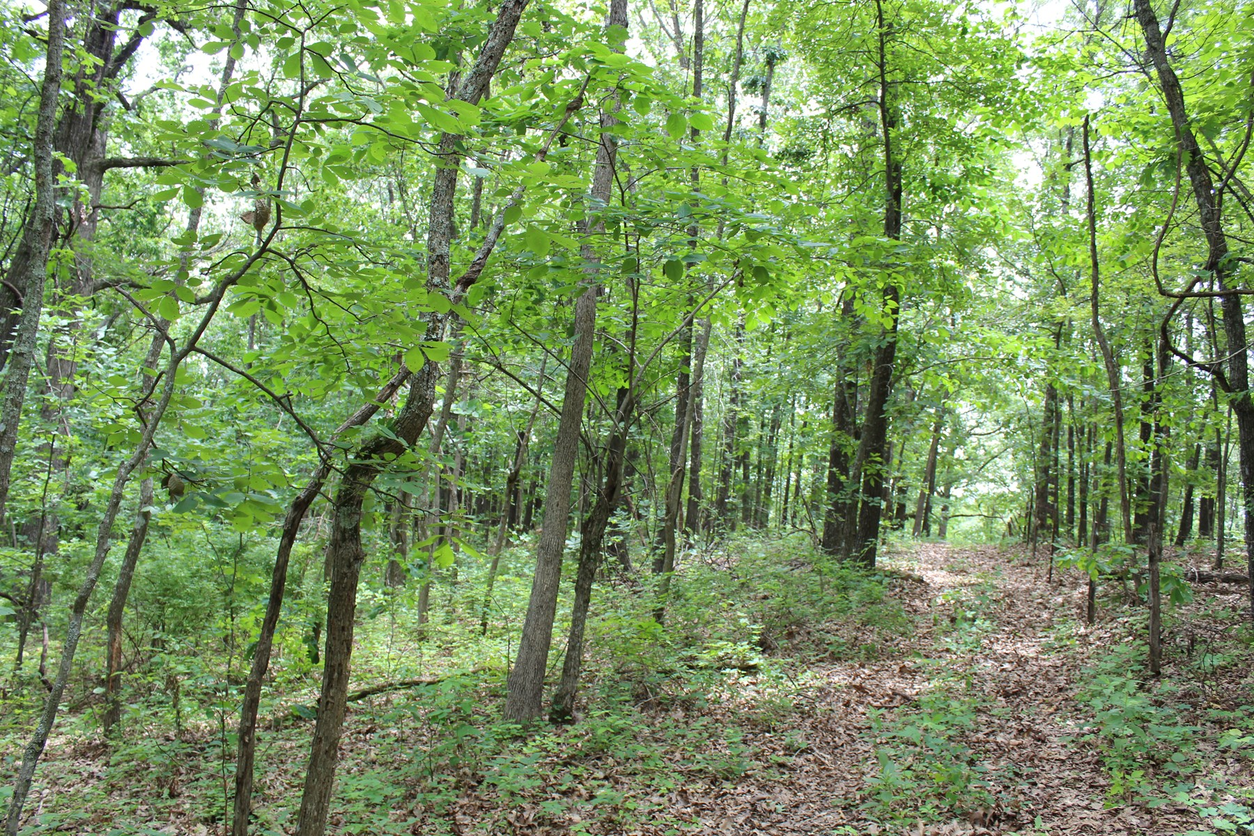 Southern Missouri Wooded Acreage For Sale in Webster County