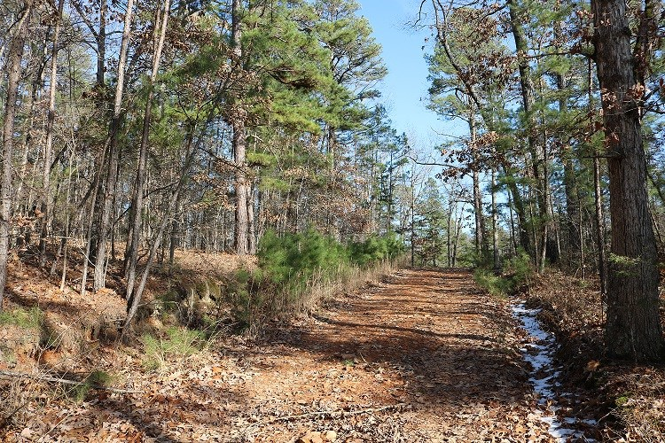 ACREAGE FOR SALE IN MELBOURNE, AR