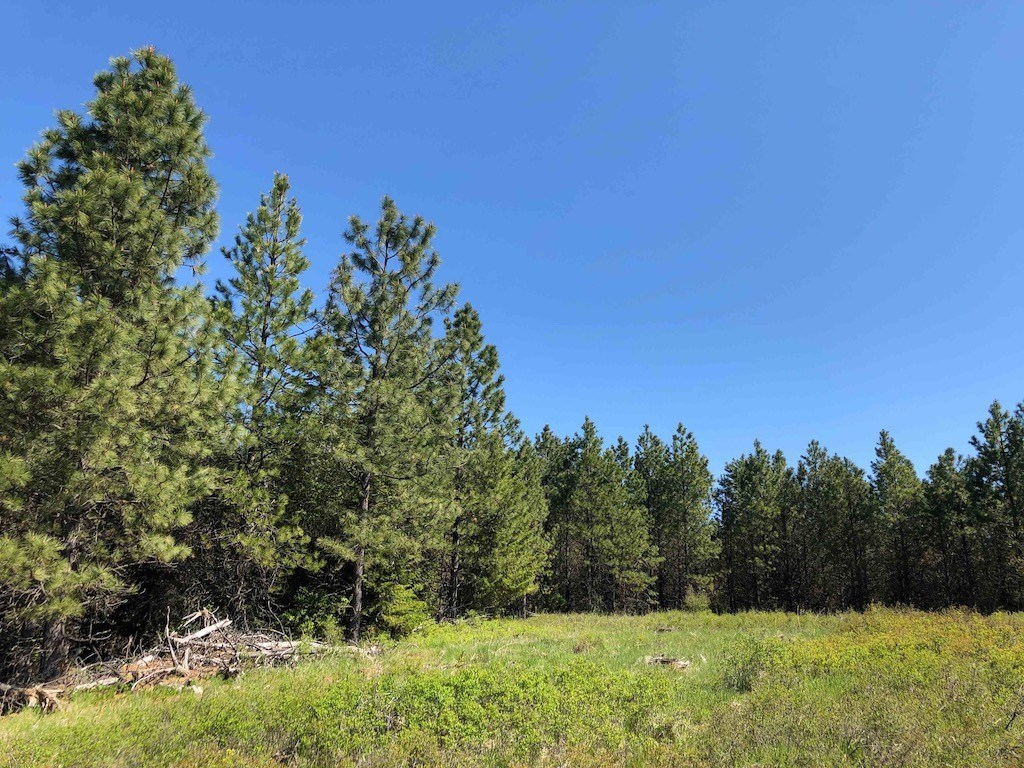 Rural Acreage Lot 8 Fraser Pines Subdivision Weippe, ID