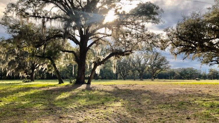 5 ACRES FOR SALE in Gilchrist County, FL