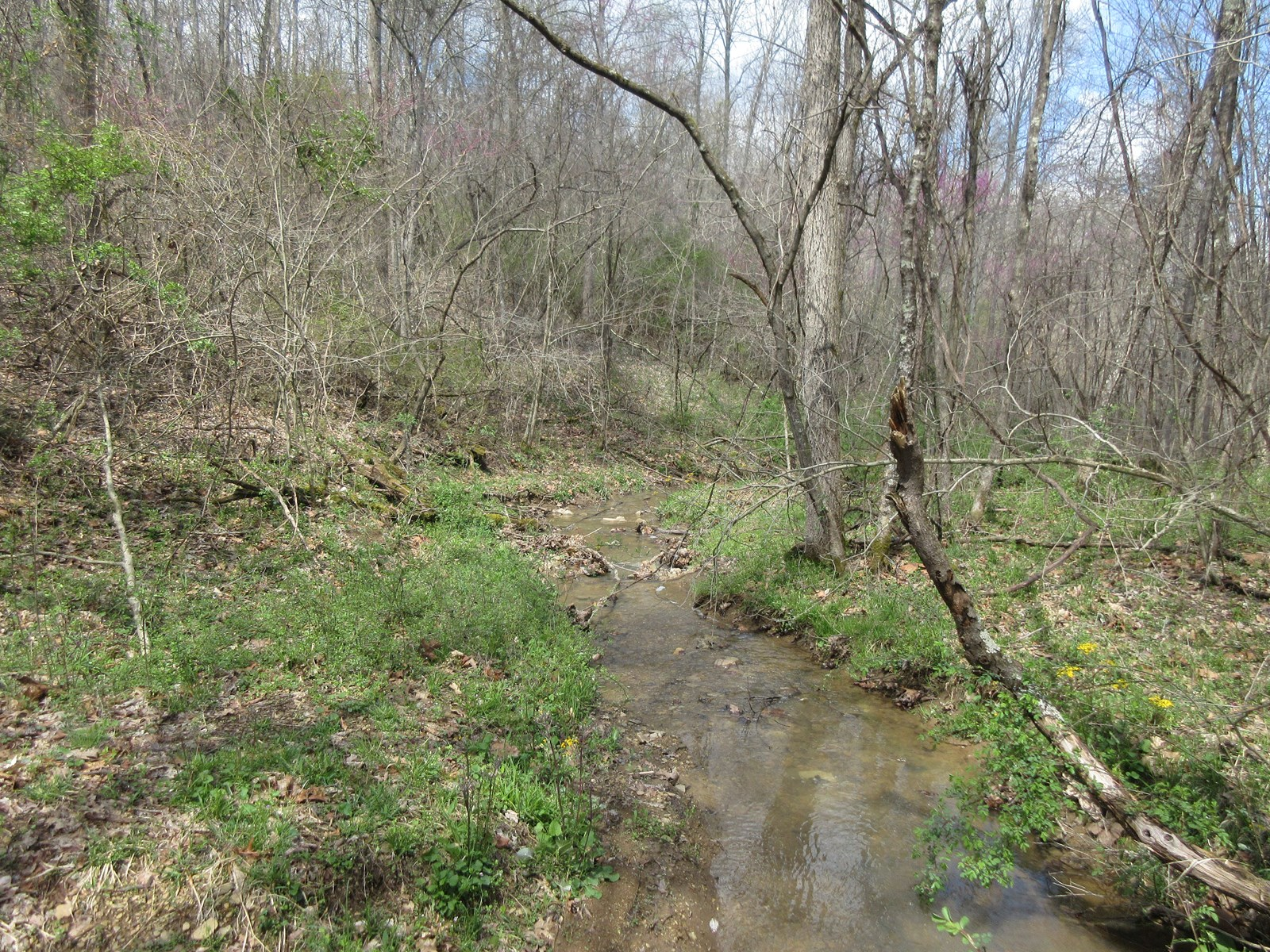 Meigs County Prime Hunting land