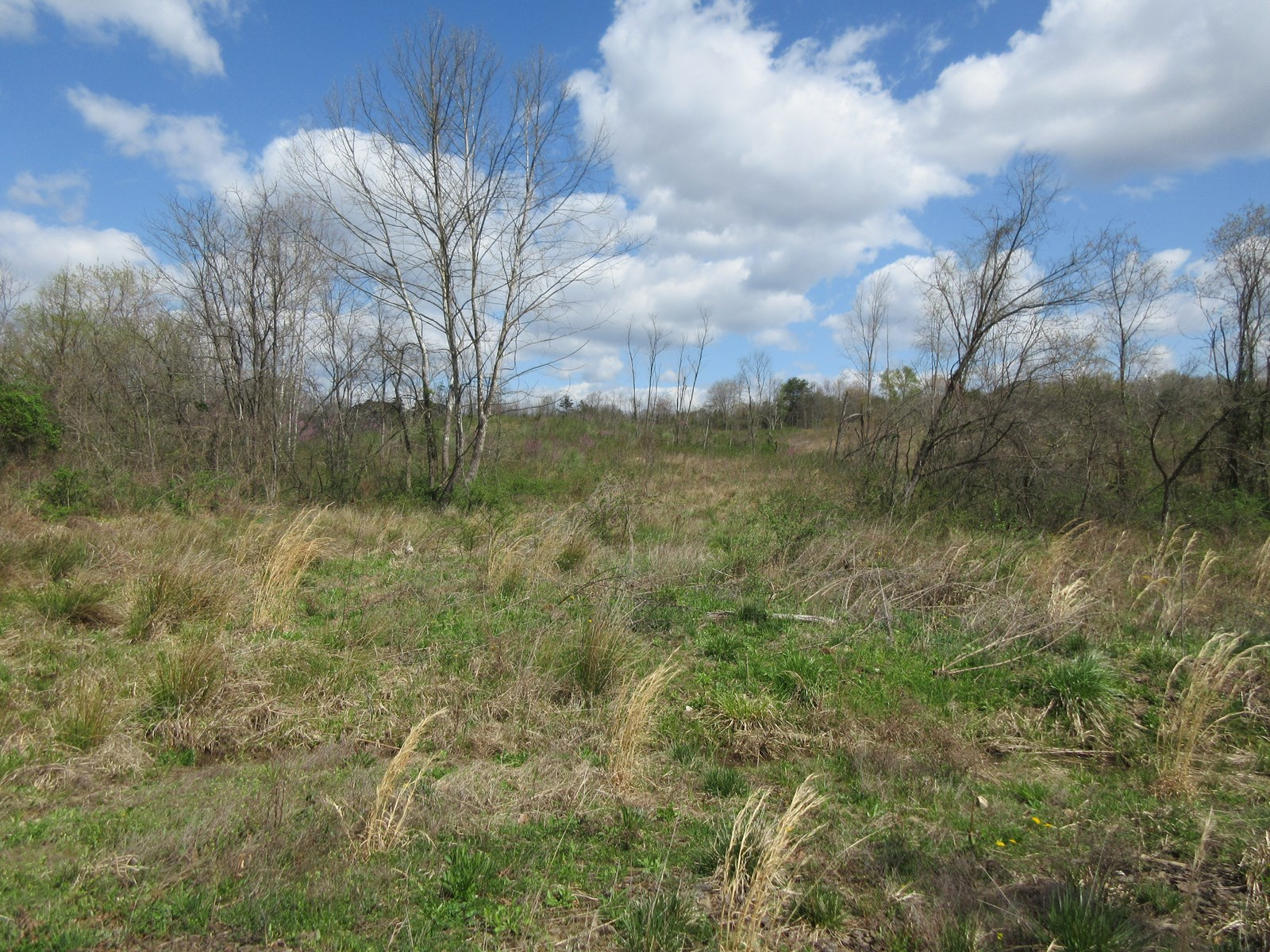 Large Acreage Hunting Land in Meigs County