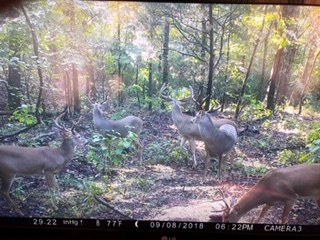 Deer Caught on Property Trail Cam