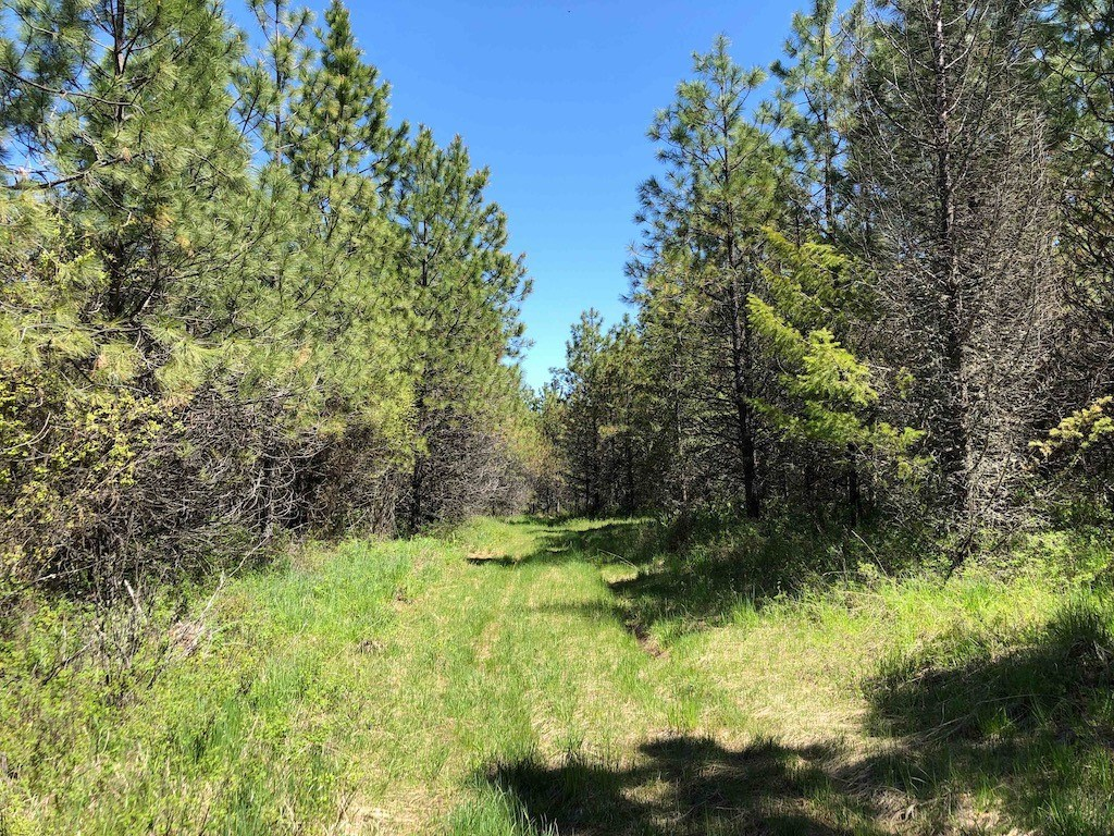 Rural Acreage Lot 12 Fraser Pines Subdivision Weippe, ID