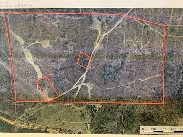 Hunting Land For Sale in Henry County Alabama