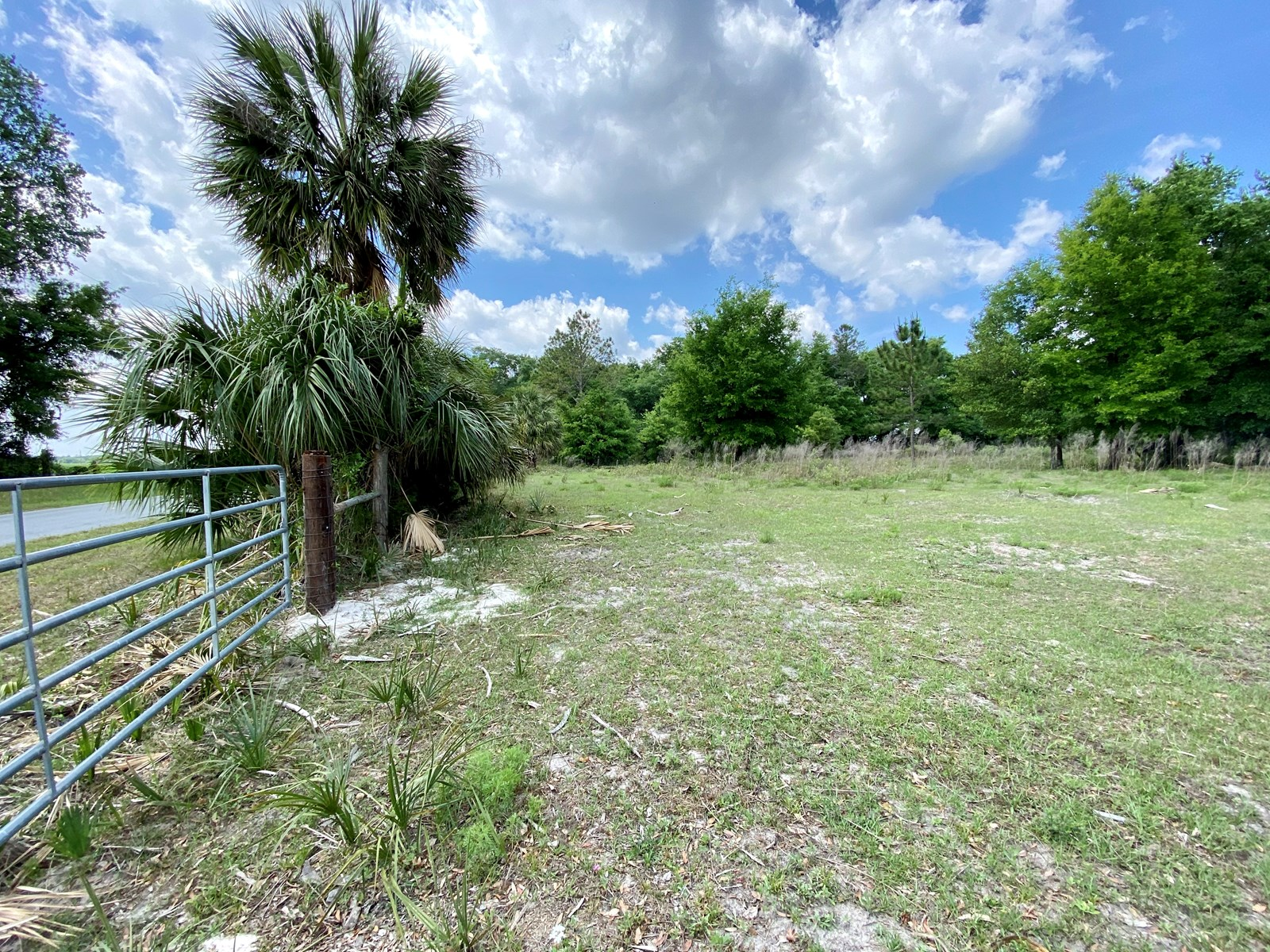41 Acres in Mayo - Fenced and Ready!