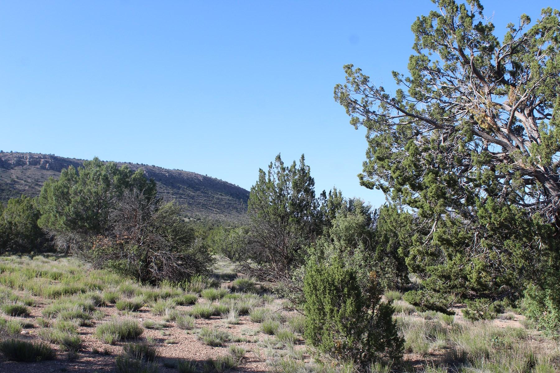 Mountain Acreage Northern Arizona No HOA