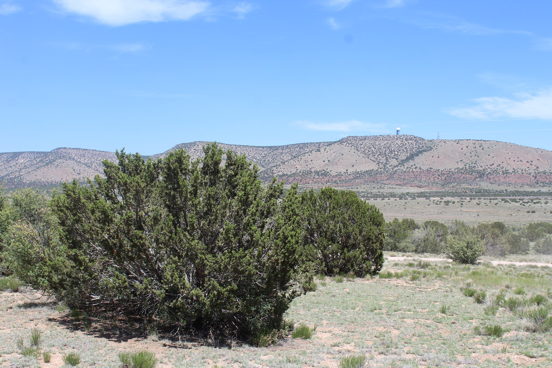 Level Parcel with Trees and Electricity for sale Seligman AZ