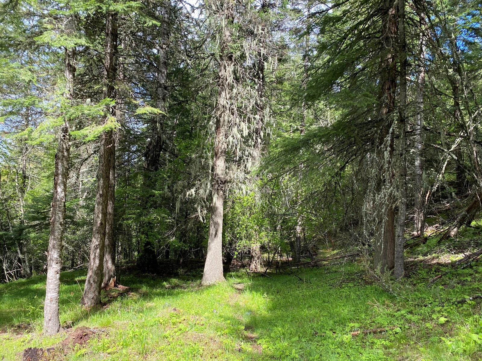 Orofino, ID Recreational Land for Sale, Timberland, Campsite