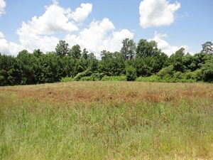 HUNTING AND TIMBERLAND FOR SALE FRANKLIN COUNTY MISSISSIPPI