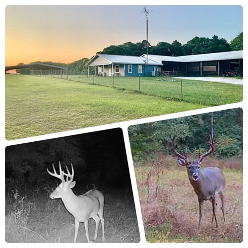 South Alabama Hunting & Horse Farm Henry County 440ac Equine