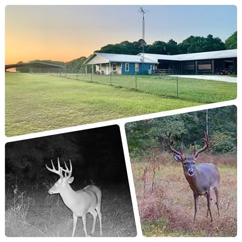 South Alabama Hunting & Horse Farm Henry County 440ac Equine