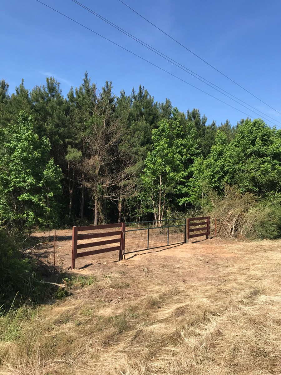 Timberland For Sale in Cass Co, Tx, with Pond and Creek