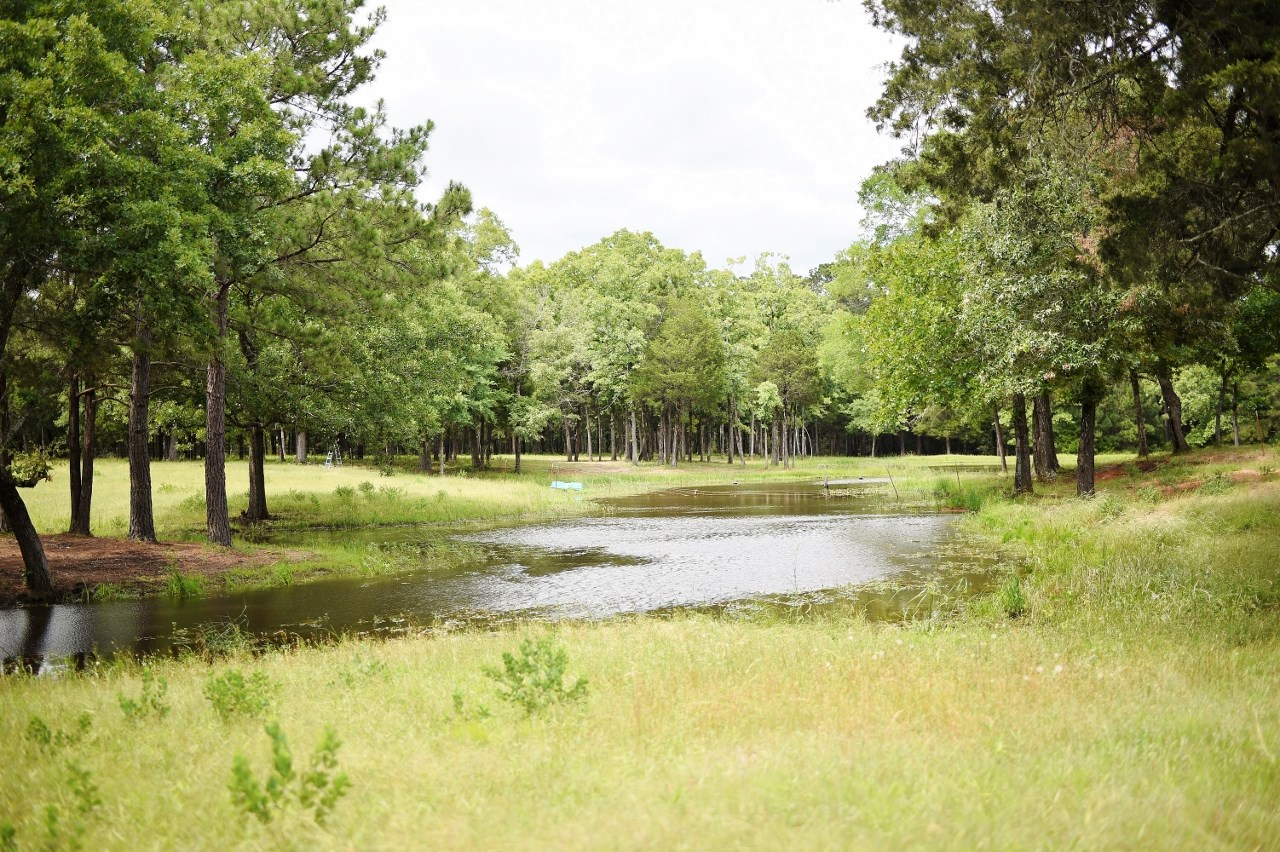 Land for Sale in Leon County, Texas